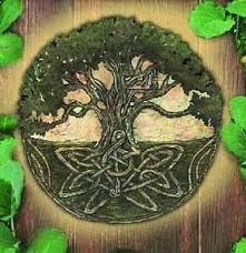duizi pomul vietii