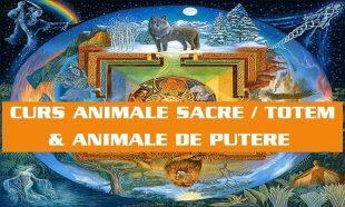 CURS ANIMALE SACRE - TOTEM si ANIMALE DE PUTERE
