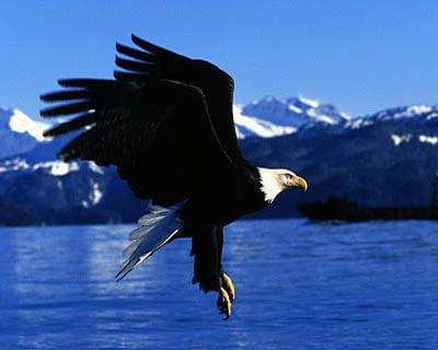 Vulturul Plesuv1 Efectul Pygmalion, Nlp Si Autoiluziile - De Citit! :)