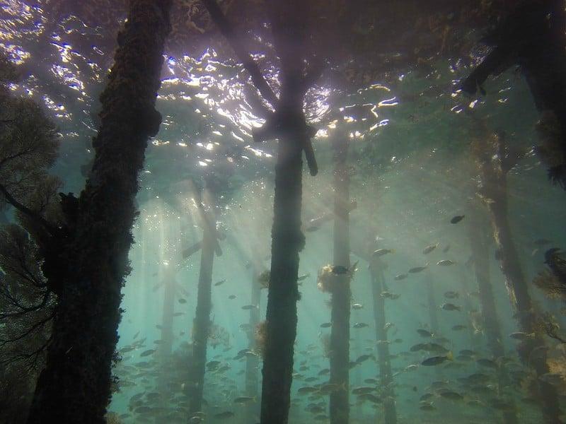 Underwater Forest Civilizatia Marii Negre-Atlantida, Potopul A Inceput In Romania
