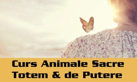 Curs Si Initiere Animale Sacre Totem Si Animale De Putere